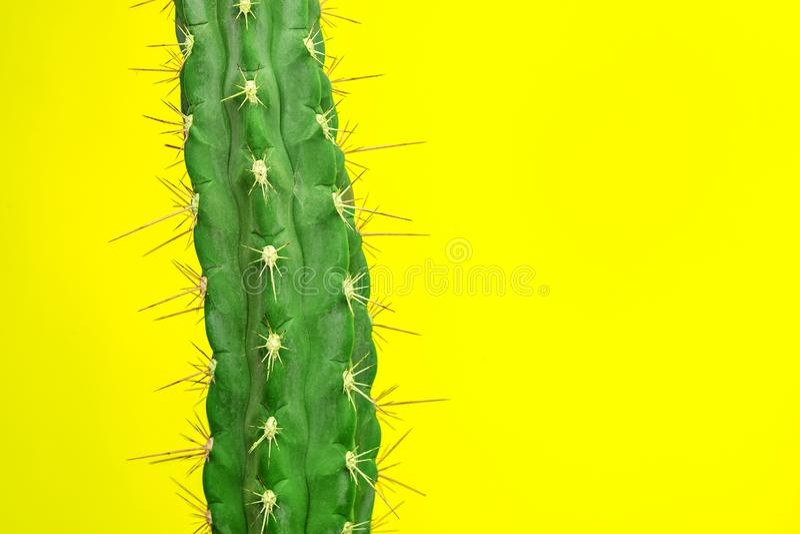 Diseño determinado de la moda del cactus Stillife mínimo Colores brillantes de moda fotografía de archivo libre de regalías