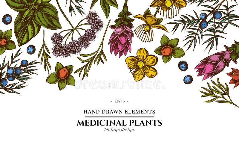 Diseño floral con la angélica coloreada, albahaca, enebro, hypericum, romero, cúrcuma fotos de archivo libres de regalías