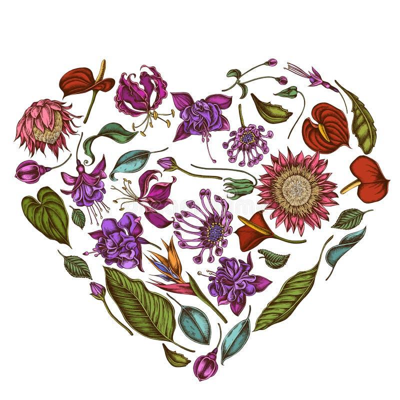 Diseño floral con las margaritas africanas coloreadas, fucsia, gloriosa, protea de rey, Anthurium, strelitzia del corazón ilustración del vector