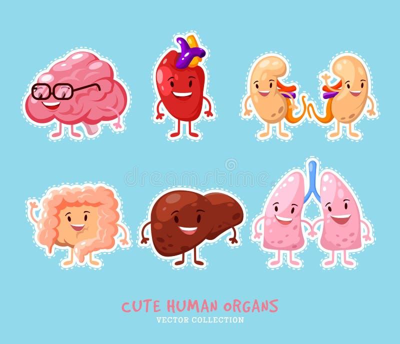 Diseño Humano De Los Remiendos De Los órganos Internos Etiquetas ...