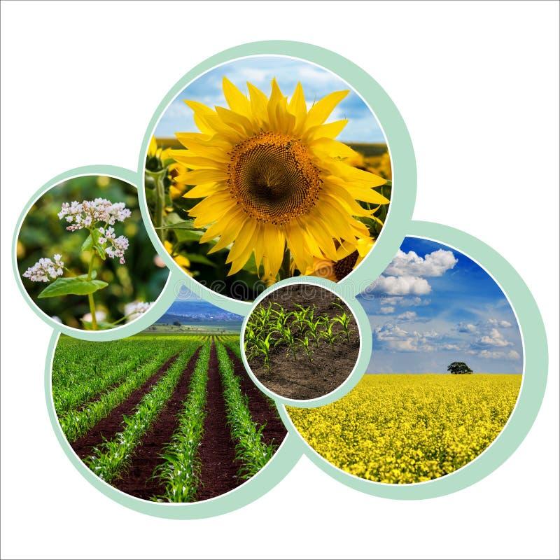 Diseño individual de un círculo para el tema agrario con foto foto de archivo libre de regalías