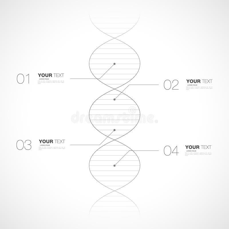 Diseño infographic Editable de la DNA aislado en el fondo blanco libre illustration