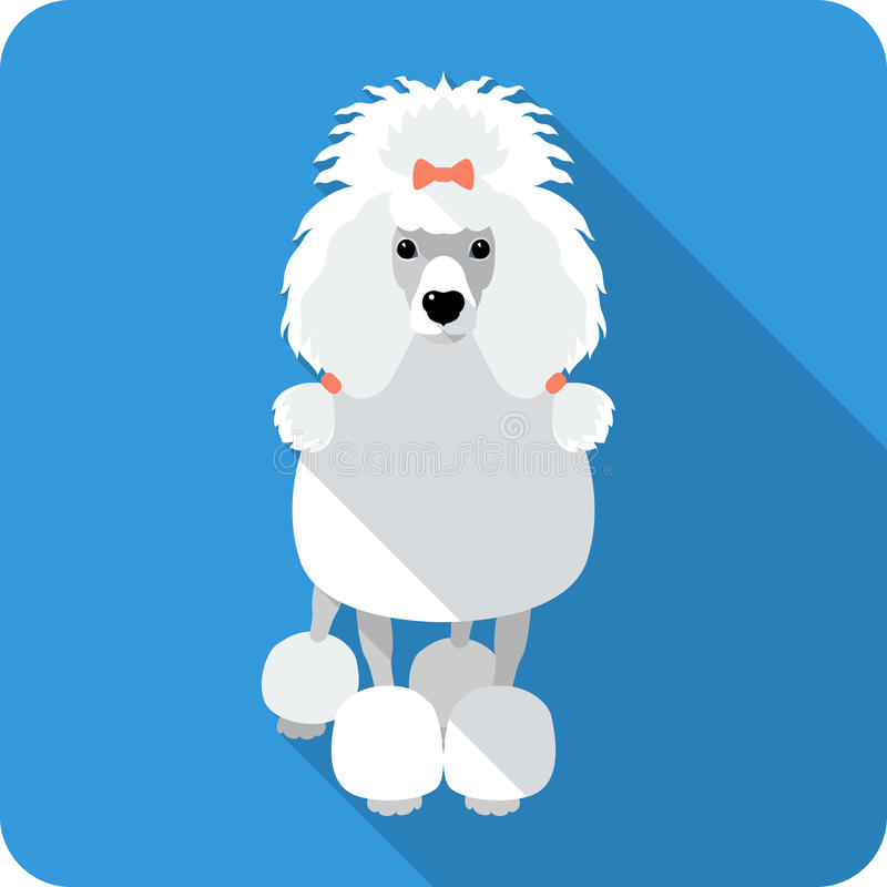 Diseño plano del icono del caniche del perro stock de ilustración