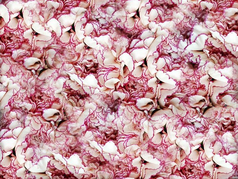 Dise?o texturizado extracto del fondo de la flor del clavel, ejemplo fotos de archivo