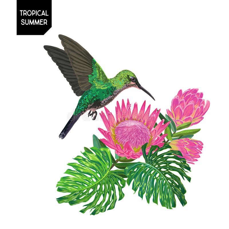 Diseño tropical del verano con el colibrí y las flores Fondo floral con el pájaro tropical, el Protea y las hojas de palma de Mon libre illustration