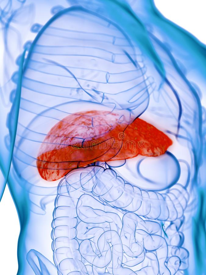 A diseased liver. 3d rendered medically accurate illustration of a diseased liver vector illustration