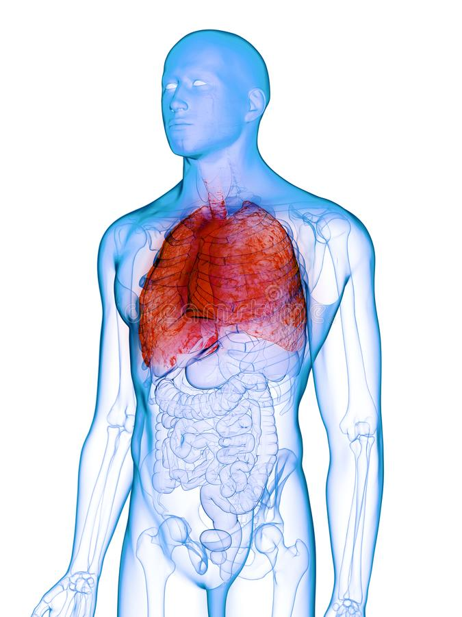 A diseased lung. 3d rendered medically accurate illustration of a diseased lung vector illustration