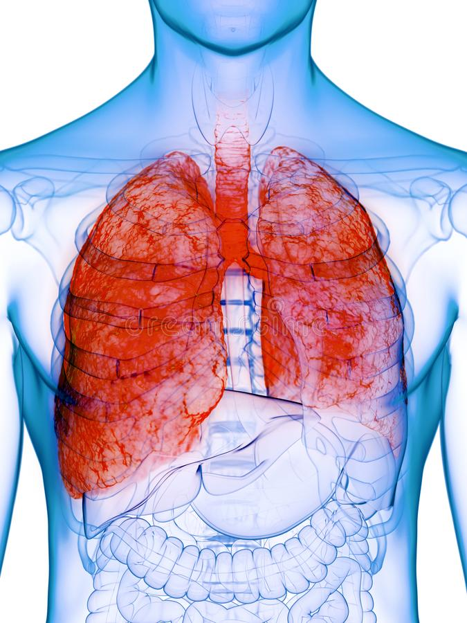 A diseased lung. 3d rendered medically accurate illustration of a diseased lung stock illustration