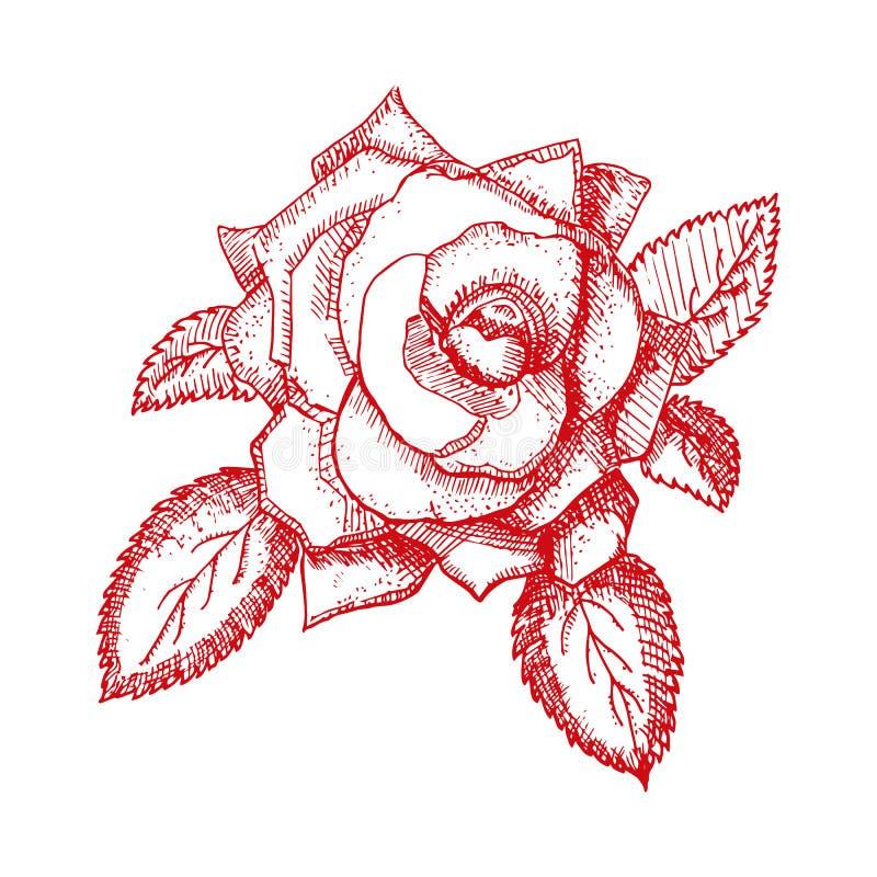 Disegnato a mano d'annata è aumentato Illustrazione di vettore illustrazione di stock