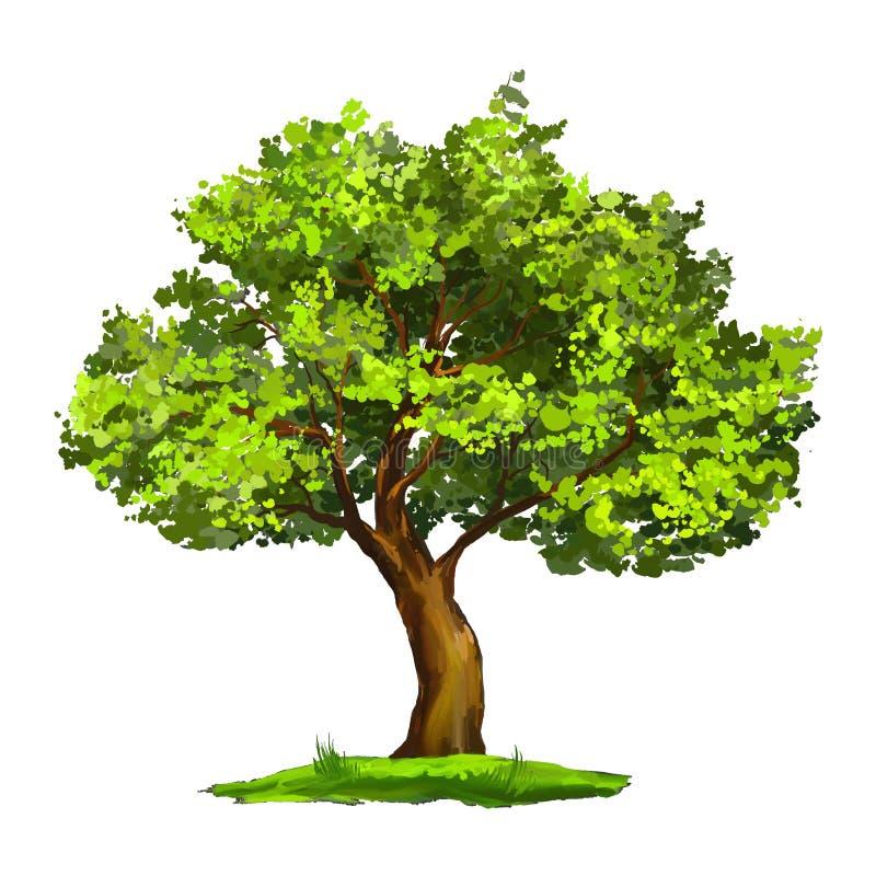 Disegnato a mano dell'illustrazione di vettore dell'albero dipinto illustrazione di stock