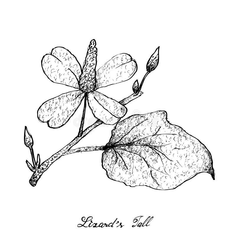 Disegnato a mano della pianta della coda del ` s della lucertola su fondo bianco illustrazione di stock