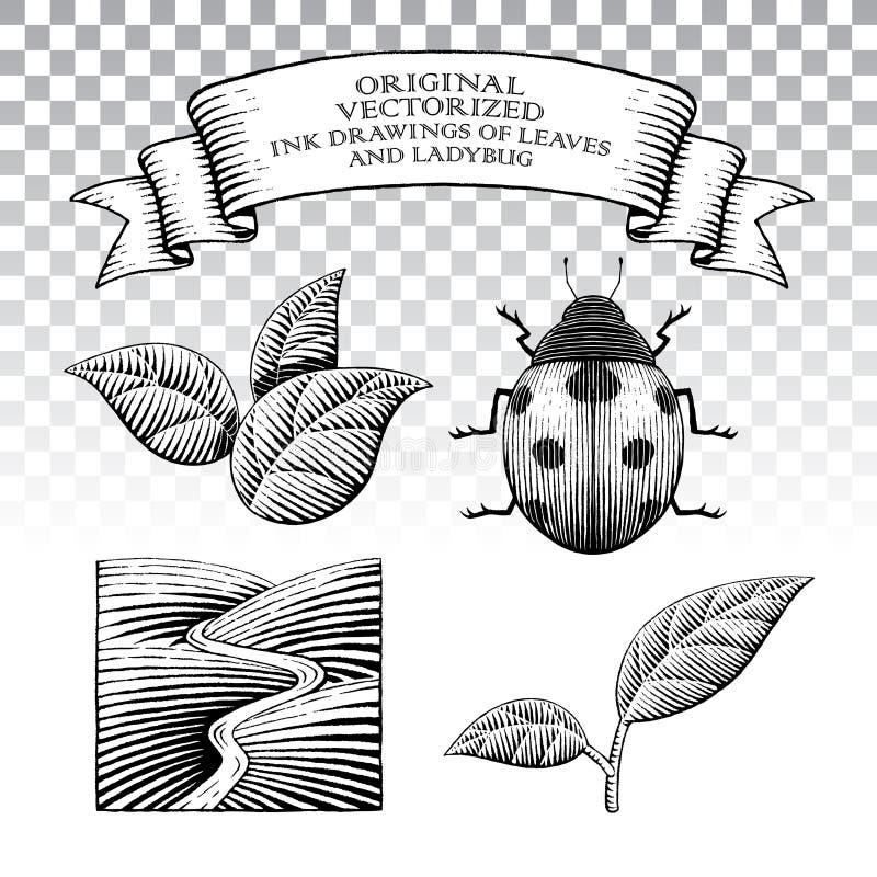 Disegni dell'inchiostro di stile di Scratchboard delle foglie e della coccinella illustrazione vettoriale