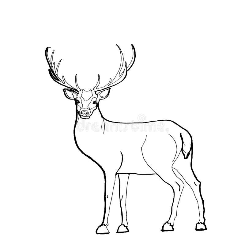 Disegno dei cervi illustrazione di stock
