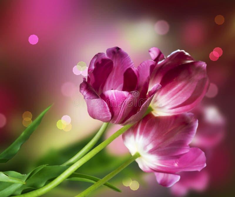 Disegno del fiore dei tulipani immagini stock