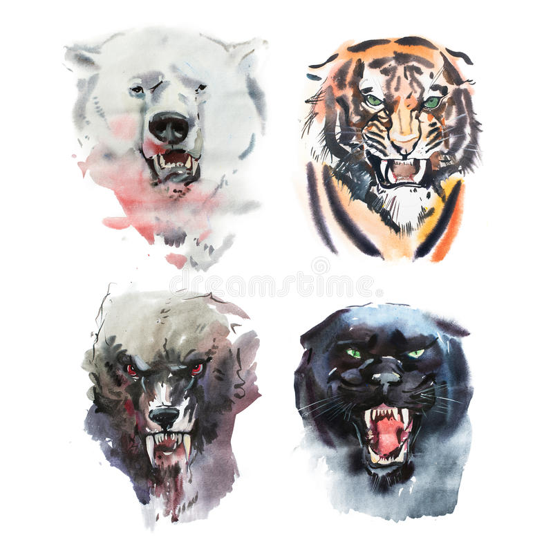 Disegno dell'acquerello dell'orso, della tigre, del lupo e della pantera di sguardo arrabbiati Ritratto animale su fondo bianco illustrazione vettoriale