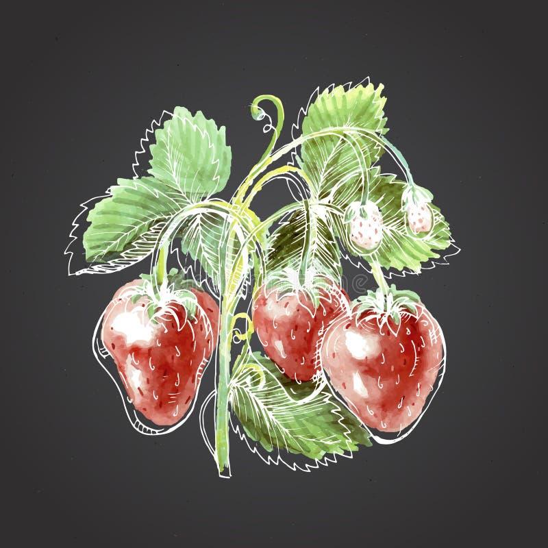 Disegno dell'acquerello della fragola Fragola contro una parte posteriore di buio royalty illustrazione gratis