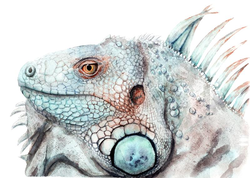 Disegno dell'acquerello di animale - iguana di colore, schizzo illustrazione vettoriale