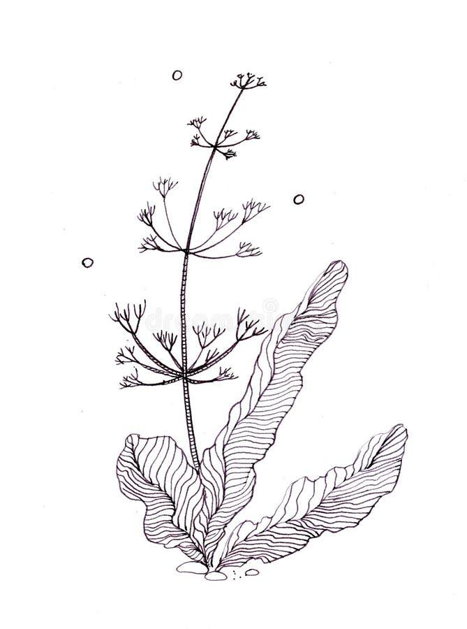 Disegno dell'inchiostro di china delle piante di seaaquarium e di alcune pietre subacquee immagine stock libera da diritti