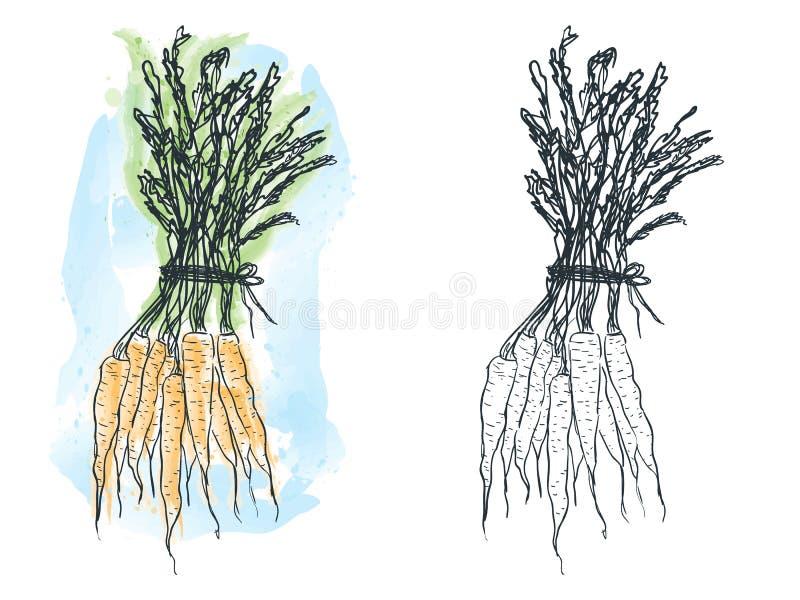 Disegno della carota dell'acquerello illustrazione di stock