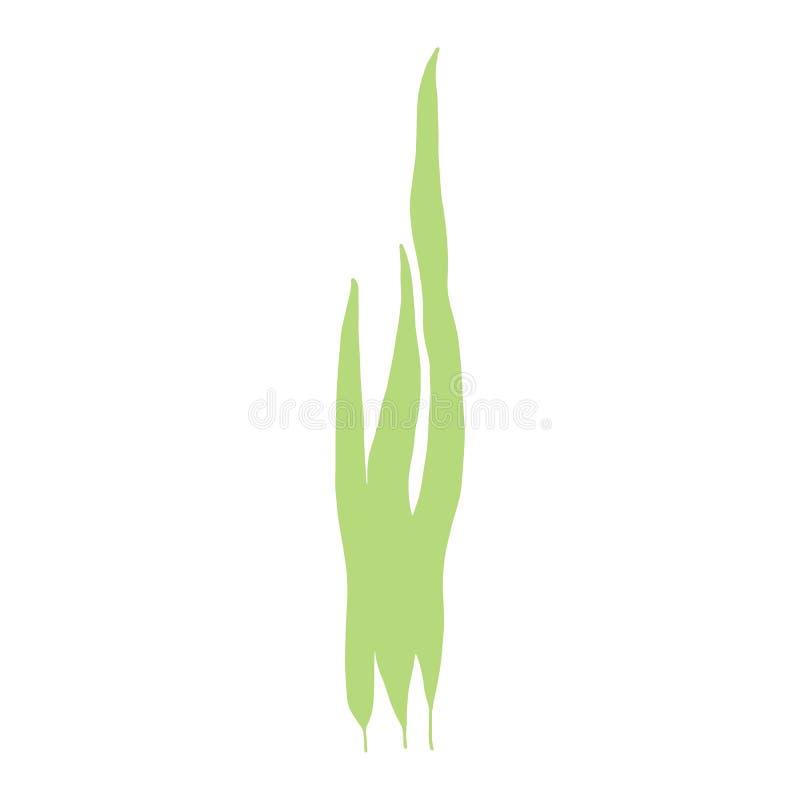 Disegno della mano isolato foglie delle alghe Su fondo bianco illustrazione vettoriale