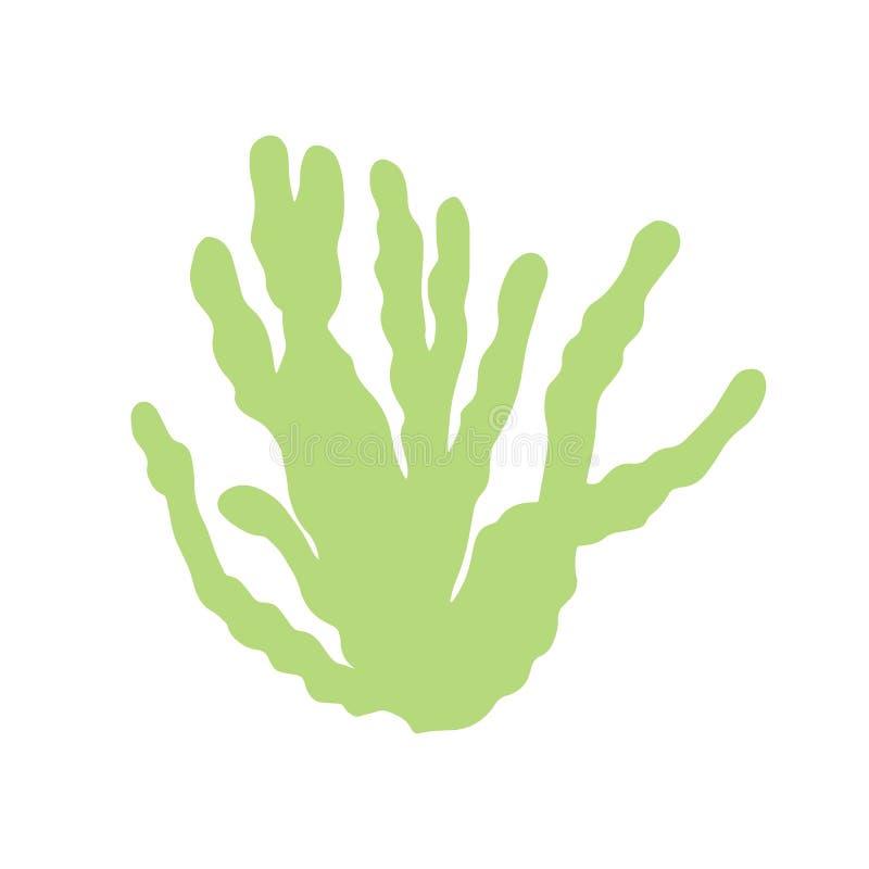 Disegno della mano isolato foglie delle alghe Sul vettore bianco del fondo illustrazione di stock