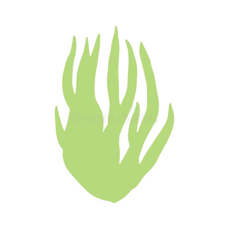 Disegno della mano isolato foglie delle alghe sul vettore bianco s del fondo illustrazione di stock