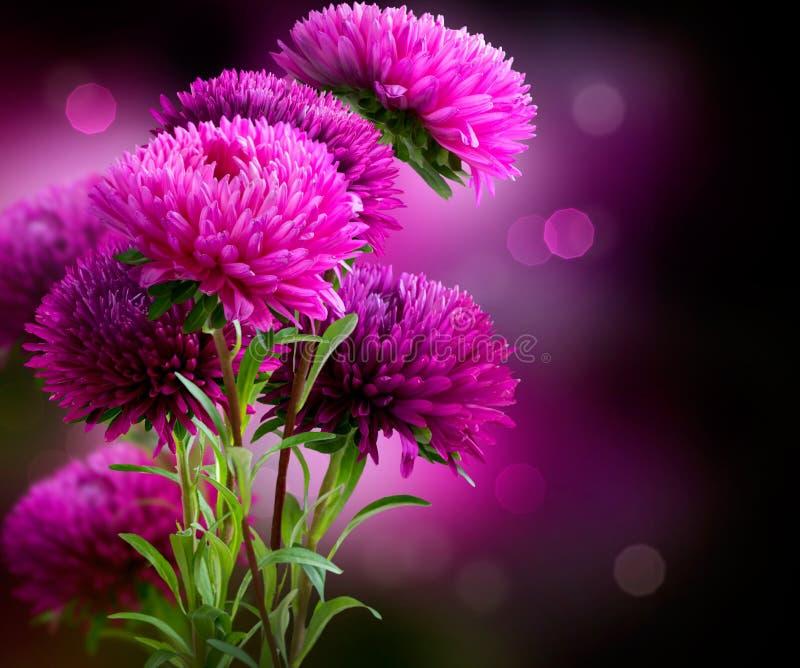 Disegno di arte dei fiori dell'aster fotografia stock libera da diritti
