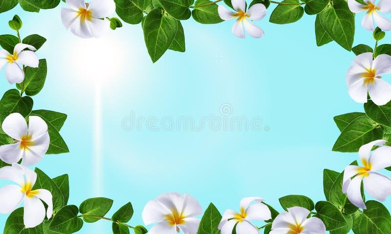 Disegno di arte dei fiori La pagina ha fatto i fiori, il fondo del biglietto di S. Valentino delle foglie verdi con i fiori immagini stock