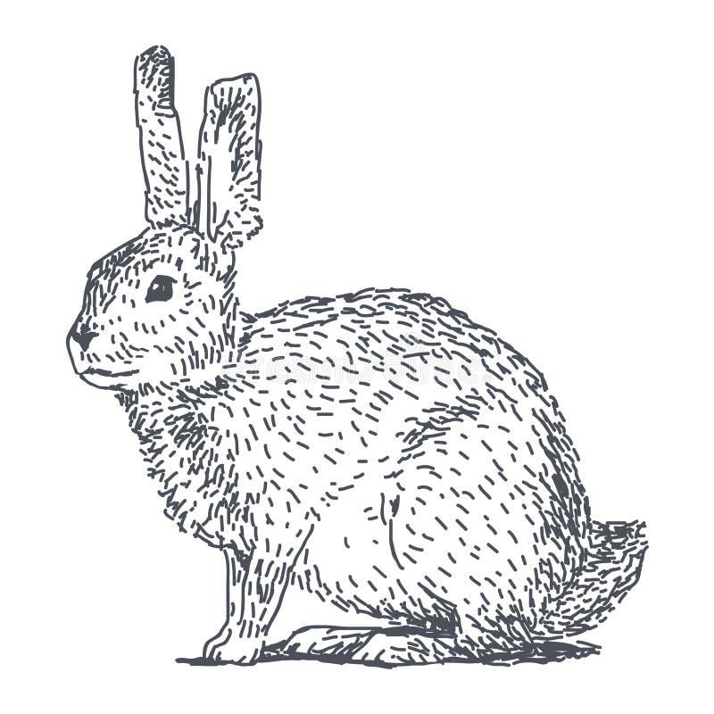 Disegno di schizzo della lepre illustrazione vettoriale for Lepre disegno da colorare