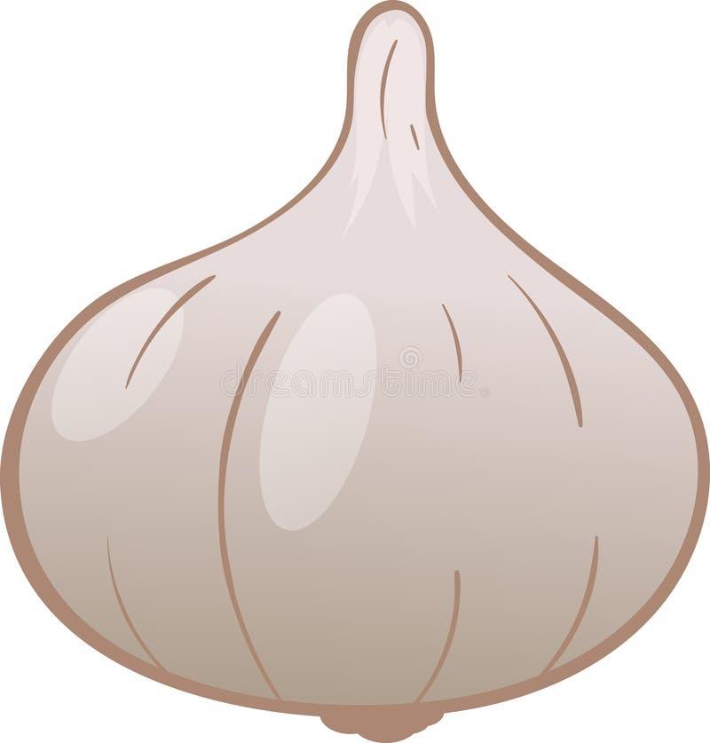 Disegno di vettore dell'aglio royalty illustrazione gratis