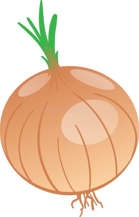 Disegno di vettore della cipolla royalty illustrazione gratis