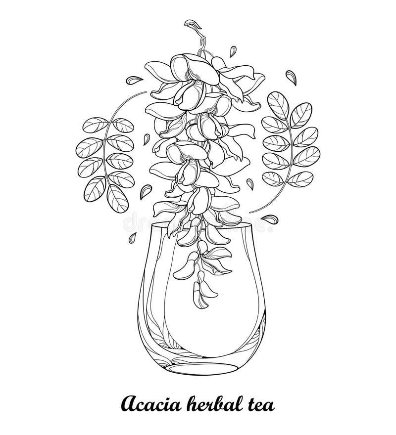 Disegno di vettore della tazza della tisana dell'acacia falsa o della locusta nera o di Robinia con le foglie ed il fiore nel ner royalty illustrazione gratis