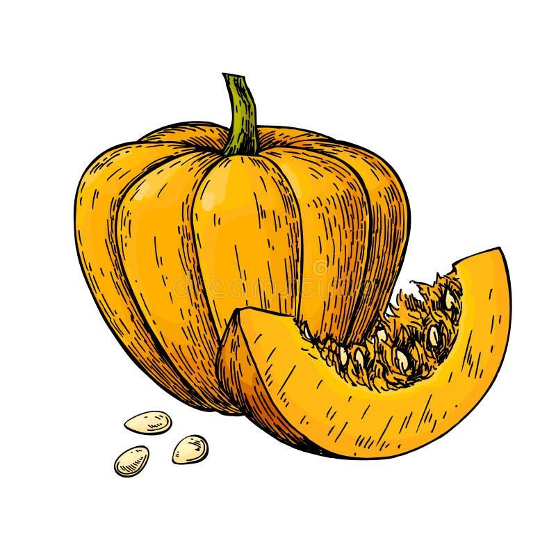 Disegno di vettore della zucca oggetto disegnato a mano con la p affettata illustrazione di stock