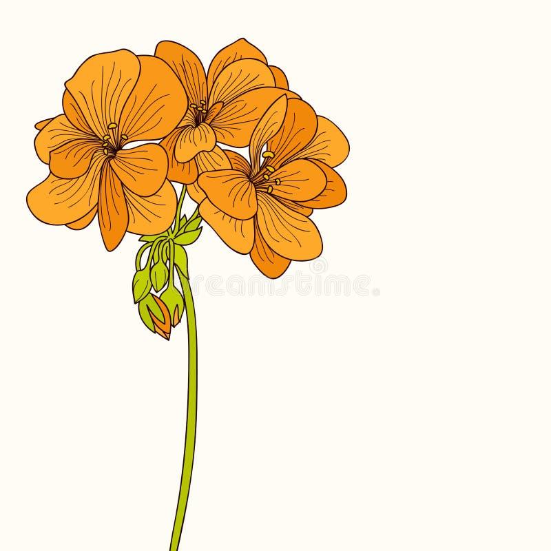 Disegno giallo del fiore del geranio illustrazione di - Geranio giallo ...