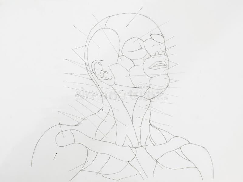 Disegno a matita del collo del viso umano fotografia stock libera da diritti