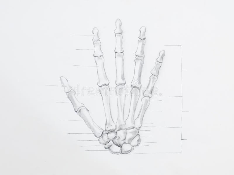 Disegno a matita delle ossa di mano fotografia stock