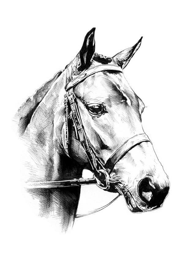Disegno a matita a mano libera della testa di cavallo immagini stock