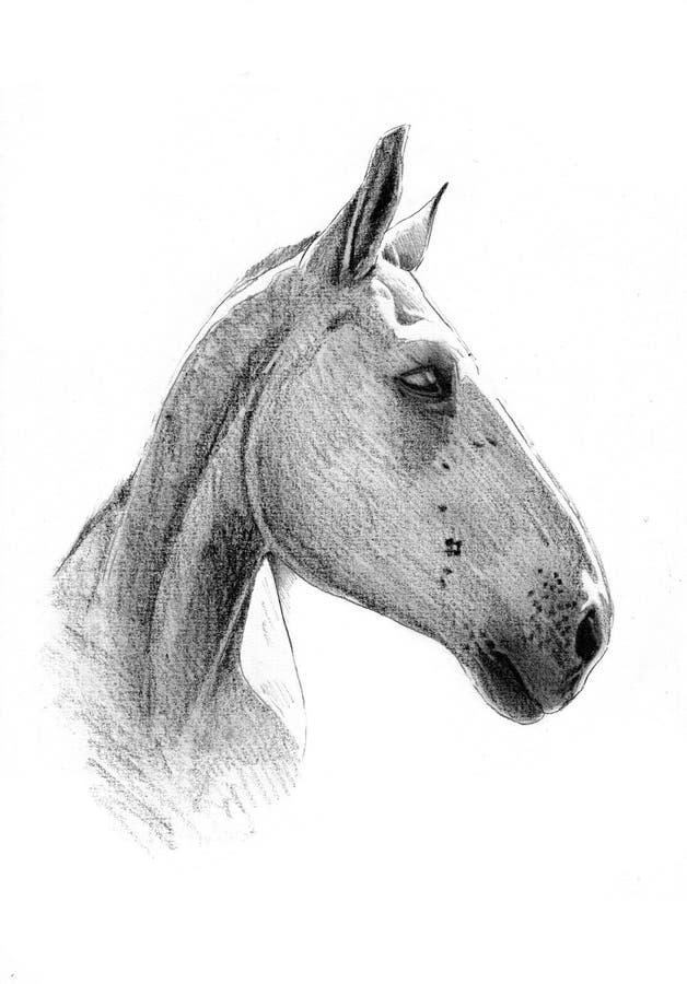 Disegno a matita a mano libera della testa di cavallo for Cavallo disegno a matita
