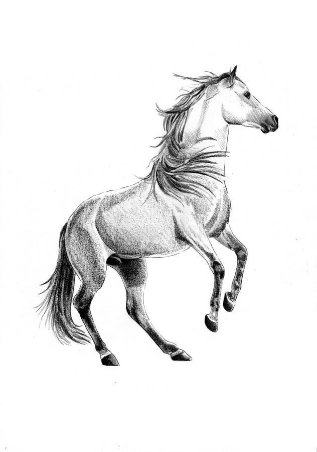 Molto disegni di cavalli a matita je64 pineglen for Disegni facili da disegnare a mano libera