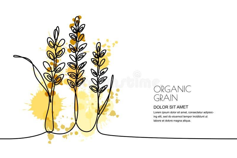 Disegno a tratteggio continuo Vector il grano dell'acquerello, le orecchie del riso ed i grani Progettazione per i prodotti a bas illustrazione di stock