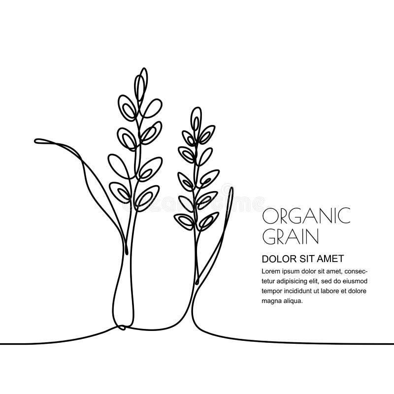 Disegno a tratteggio continuo Vector l'illustrazione lineare di grano, delle orecchie del riso e dei grani Progettazione per i pr illustrazione vettoriale