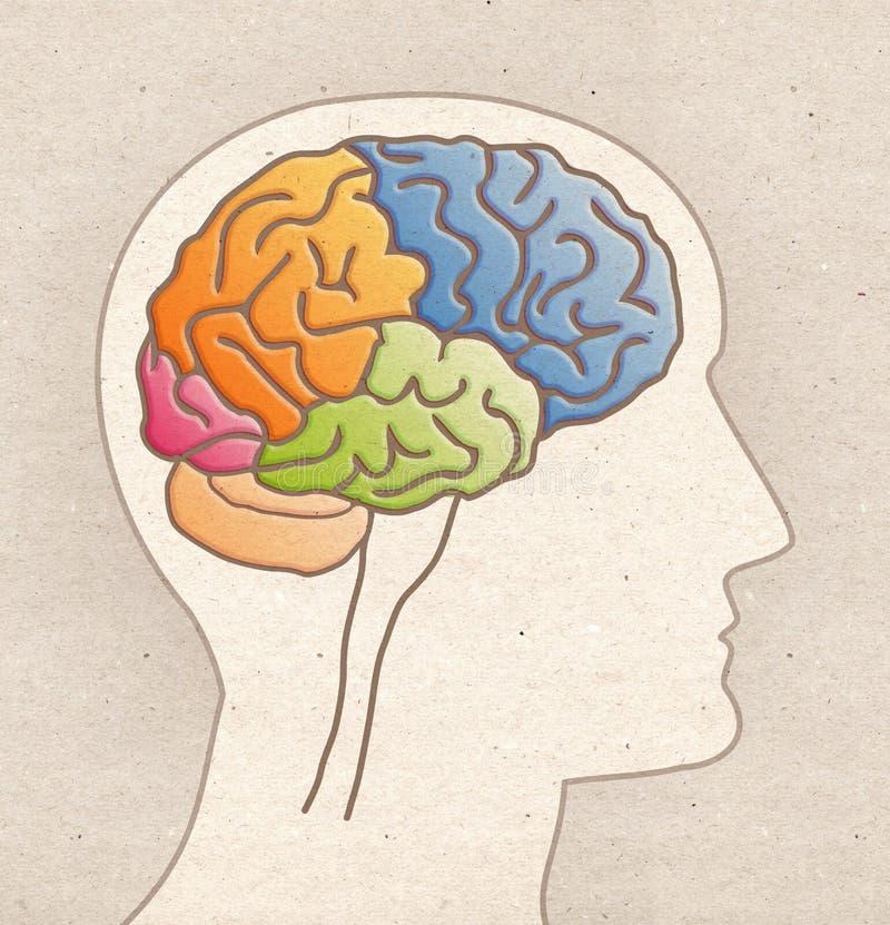 Disegno umano di anatomia - testa di profilo con BRAIN Lobes immagini stock