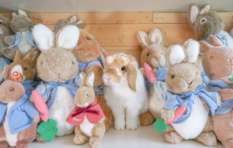 Disfraces del conejo de Holland Lop entre otros caracteres suaves del conejo de la muñeca de la felpa de Peter Rabbit fotos de archivo libres de regalías