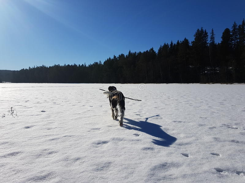 Disfrutar de invierno fotografía de archivo