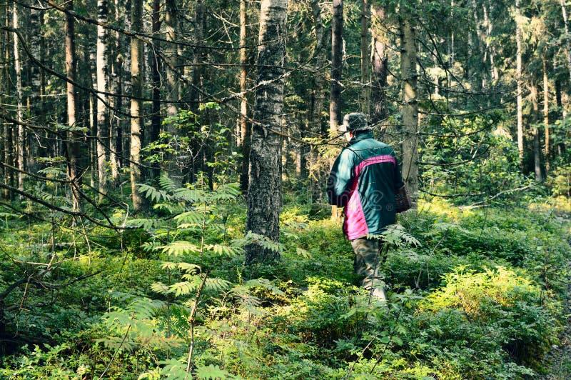 Disfrutar de la opinión del bosque El caminar en la caza de la seta de la persona del bosque en bosque del verano por la mañana foto de archivo