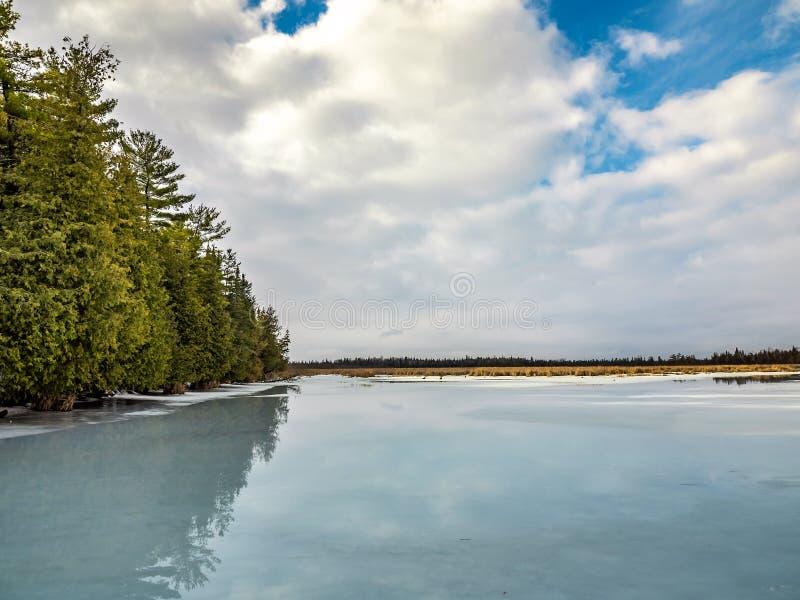 Disgelo Cedar Forest Beside Frozen Marsh di inverno immagine stock libera da diritti