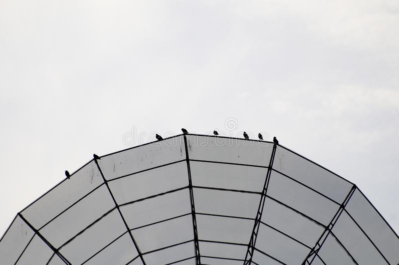 Dish antenna with birds stock image