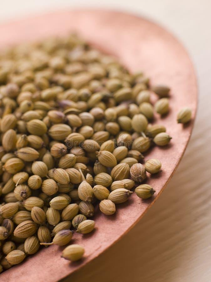 Dish of Coriander Seeds stock photo