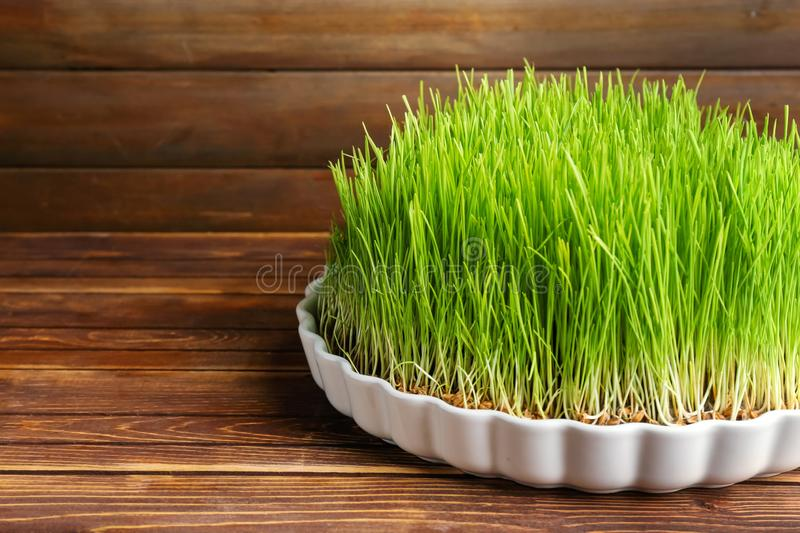 Dish with sprouted wheat grass on wooden background royalty free stock images
