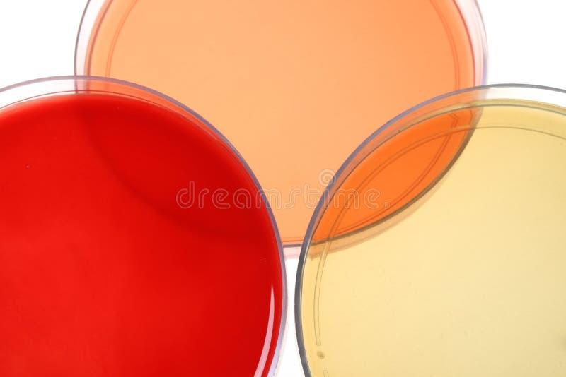 dishes медицинское исследование petri стоковое изображение rf